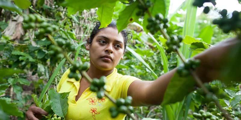 Jodaira Savalvarro Pérez prunes coffee plants on her family farm outside of San Ramón, Nicaragua. 2014. Photo Credit: ©Yoni Brooks.