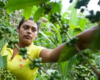 Jodaira Savalvarro Pérez prunes coffee plants on her family farm outside of San Ramón, Nicaragua. 2014. Photo Credit: ©Yoni Brooks.
