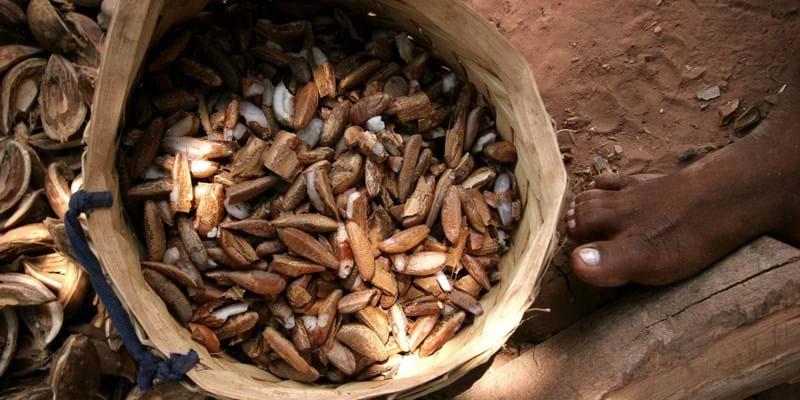 A basket of shelled Babassu nuts. Brazil. Photo Credit: ©Douglas Engle/Panos